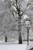 Buzlu bir kış manzarası içinde ağaçlar — Stok fotoğraf