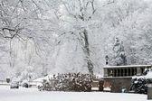 Un parque de invierno — Foto de Stock