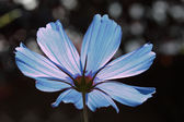 The other side of a blue cosmos — Stock Photo