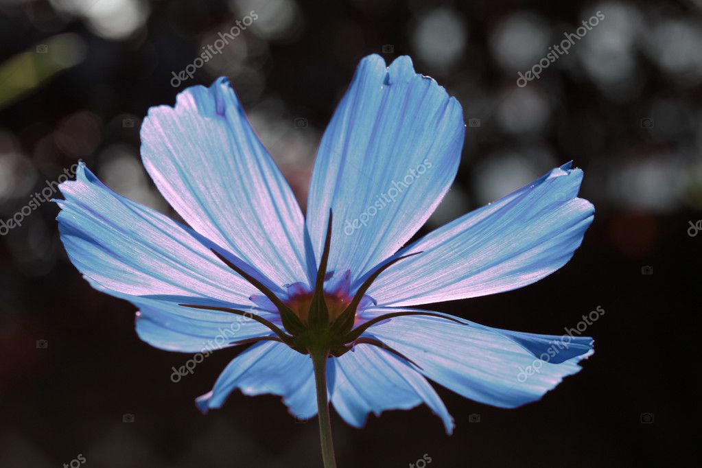 The other side of a blue cosmos — Stock Photo ...