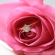Diamond engagement ring in a pink rose — Stock Photo