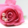 Pink rose with pearls — Stock Photo #2035476