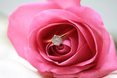 Diamond engagement ring in a pink rose — Stock fotografie
