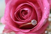 Anillo de compromiso de diamante en una húmeda rosa — Foto de Stock