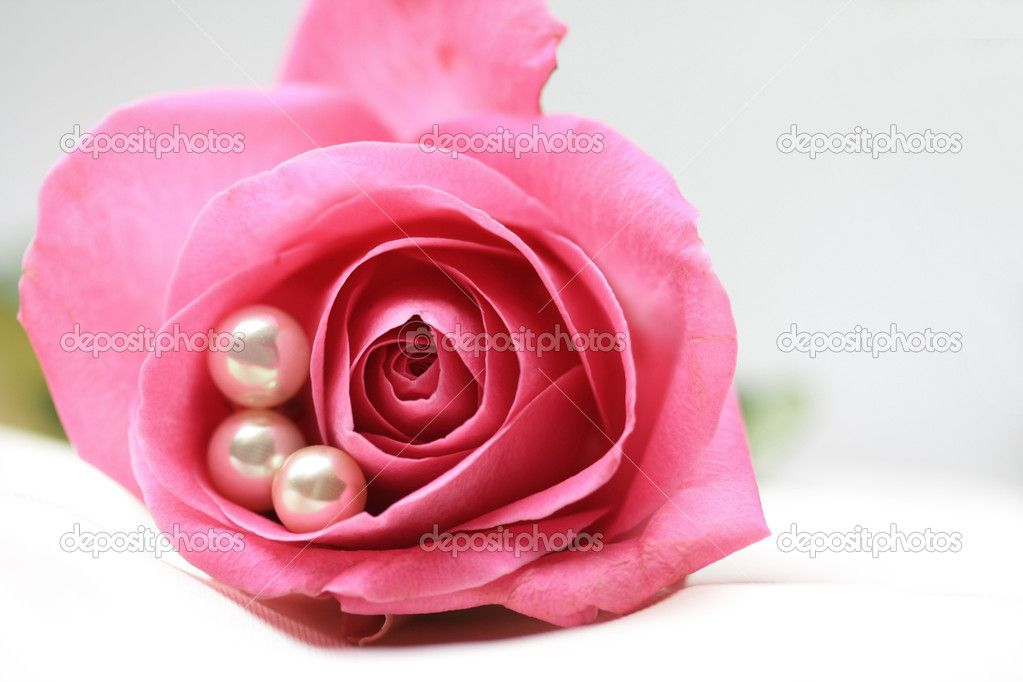 Three white pearls in a pink rose — Stock Photo #2035476
