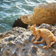 Cat in Cadiz — Stock Photo