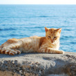 Cat in Cadiz — Stock Photo #1673523