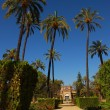 Stock Photo: Park MariLuis- Seville