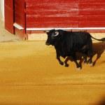Постер, плакат: Bull in plaza de toros in Spain