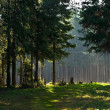 Morning in spring forest — Stock Photo