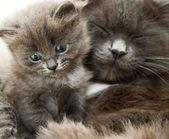 Kotów i kotek — Zdjęcie stockowe