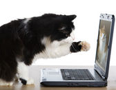 Cat pulls a paw to laptop — Stock Photo
