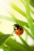 Spring ladybird — Stock Photo