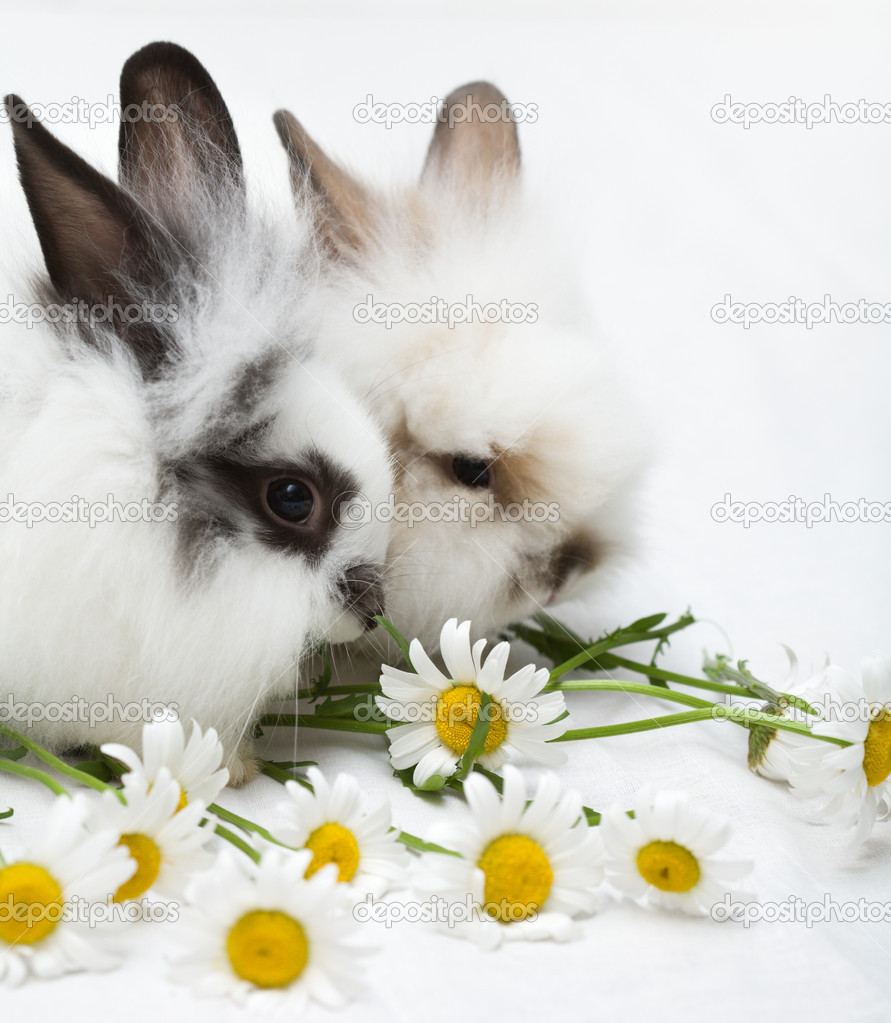 Two little rabbits — Stock Photo #1727652