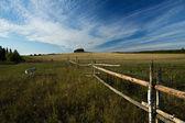 Rural life — Stock Photo