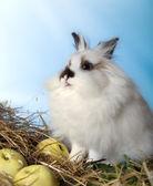 Fine doe rabbit — Stock Photo
