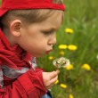 Child blowing the dandelion — Stock Photo #1743745