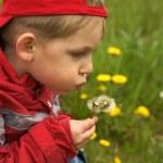 Child blowing the dandelion — Стоковое фото