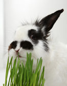Rabbit eats grass — Stock Photo