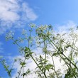 Weeds and sky — Stock Photo