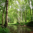 Spring pond in forest — Stock Photo
