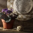 Rural still life with pansy - Stock Photo