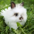 White rabbit on walk — Stock Photo