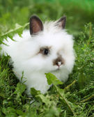 White rabbit on walk — Stock Photo