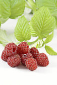Raspberries. — Stock Photo