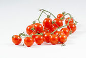 Little Red Tomatoes. — Stock Photo
