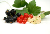 Black, Red and White Currant — Stock Photo