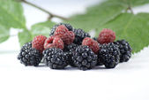 Blackberries and Raspberries. — Stock Photo