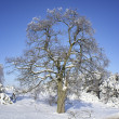 Winter tree. — Stock Photo