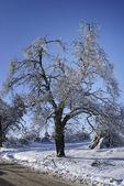 Winter tree. — Stock Photo