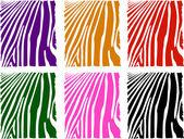 Vector color zebra skin set — Stock Vector