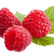 Royalty-Free Stock Photo: Group of raspberries
