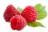 Group of raspberries — Stock Photo
