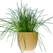 Royalty-Free Stock Photo: Chives