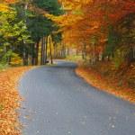 Autumn road — Stock Photo #1748171