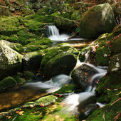 Brook in forest — Stock Photo