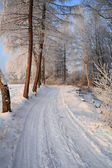 Snowy road blue cloudless sky — Stock Photo