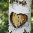 Heart in tree - Stockfoto