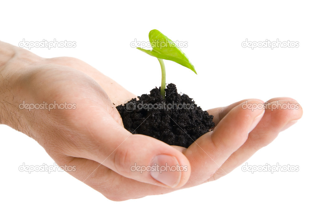 Green plant in hands isolated on white  Stock Photo #1778406