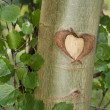 Heart in tree — Stock Photo