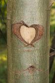 Heart in tree — Stock Photo