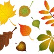 Composite of various autumn leaves — Stock Vector