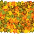 Various autumn leaves to background — Stock Vector #1795132