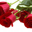 Red roses isolated on white — Stock Photo #1933954