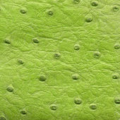 Green reptile leather texture — Stock Photo