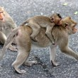 Royalty-Free Stock Photo: Wickedness monkey, Pattaya, Thailand